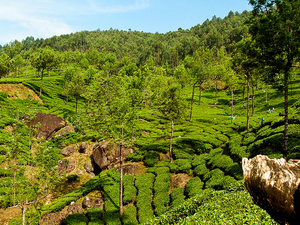 Glimpses of Kerala Photos