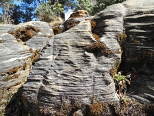 Himalayan Quartzite