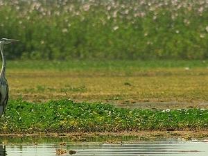 Nandur Madhmeshwar Bird Sanctuary
