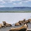 Safari Tanzania & Adventure