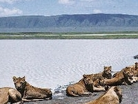 Safari Tanzania & Adventure