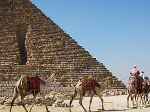 Giza Camel Trekking Photos