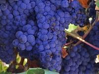 Private Wine Tour : Casablanca, Acongagua or Maipo Valley