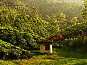 Outing Kerala Tour Packages :-7 Days Package Photos
