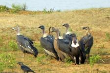 Migratory Birds In Sanctuary