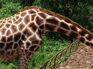 Explore Nairobi Photos