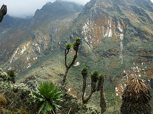 Mountain Rwenzori Hike