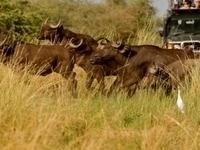 Hope Tours & Safaris Africa - Entebbe