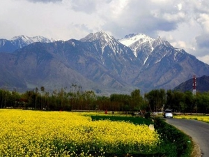 Vale of Kashmir Photos