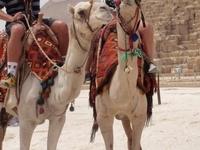 Sharm Club Excursions