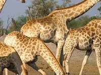 ThisAndThat Safaris -Zimbabwe