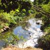 Lower Zapote River