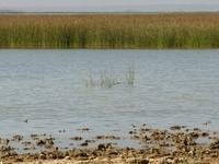 Banni Grasslands Reserve