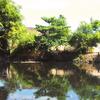 Upper Zapote River