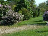 Arboretum de l'École du Breuil