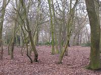 Oxleas Wood