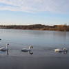 View From Neasden Recreation