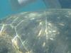 Tuneles Isabela