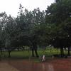 KLCC Park - South East Section