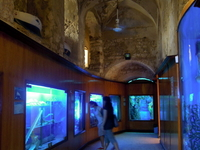 Alexandria Aquarium