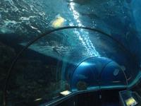 Sea Life Minnesota Aquarium