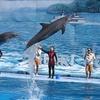 Dolphin Show At Safari World