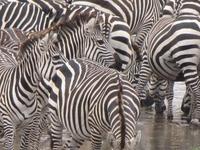 Tanzania Climbing Outfitters & Safaris (T) Ltd