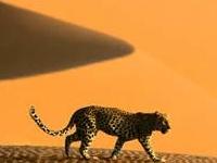 Golden Dune Travel