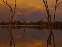 Boshack Outback