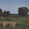 Coastal Land, Ukerewe Island