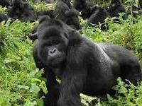 Souvenier Safaris