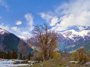 Srinagar, Phalgam, Gulmarg, Sonamarg Tour Package. Photos