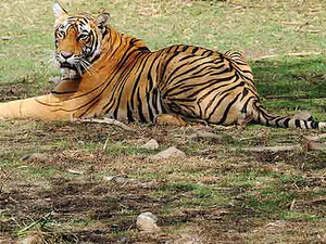 Ranthambhore Safari Tours Photos