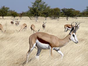 10% Discount on select safaris throughout Namibia Photos
