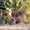 5bhitarknika Wildlife Sanctuary