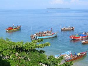 Safari Blue - Zanzibar