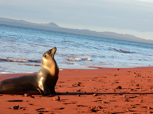 Tours to Galapagos Island Photos