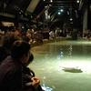 Acquario Di Genova Vasca Delle Razze
