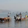 Activity @ Beach Near Anjarle MH Ratnagiri