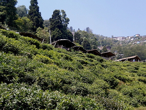 Experience Darjeeling Photos