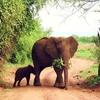 African Adventure Advisors