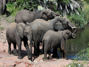 5-Day Best of Kruger Safari