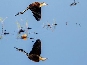 Bird Watching Tour in Zimbabwe - ThisAndThat Safaris Photos