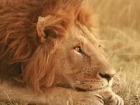 Kiboko Kenya Safaris