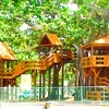 Banyan Treehouse