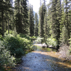 Along Twin Falls Trail - Glacier - Montana - USA