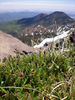 Alpine Tundra Atop Humphreys Peak