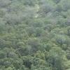 Amazon Rainforest Bird Site