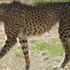 Ambapani Wildlife Sanctuary