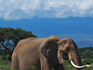 Amboseli Safari Package
